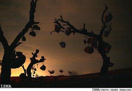باغ سنگی سیرجان