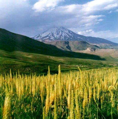 کوه دماوند